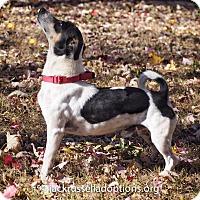Adopt A Pet :: Ross - Conyers, GA