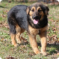 Adopt A Pet :: Lilly - Bedford, VA