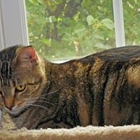 Adopt A Pet :: Samantha - Cincinnati, OH