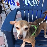 Adopt A Pet :: Roscoe - S. Pasedena, FL