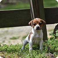 Adopt A Pet :: Maura - Groton, MA