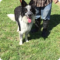 Adopt A Pet :: Axel - Allen, TX