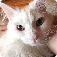 Adopt A Pet :: Chirps - Harrisonburg, VA
