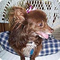Adopt A Pet :: Katie - Estes Park, CO