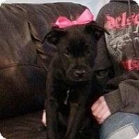 Adopt A Pet :: Sasha - Marlton, NJ