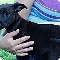 Adopt A Pet :: Puck - South Jersey, NJ