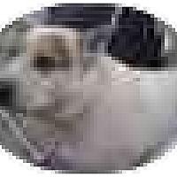 Adopt A Pet :: Ash, very sad story! - Swiftwater, PA