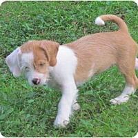 Adopt A Pet :: Zola - Madison, WI