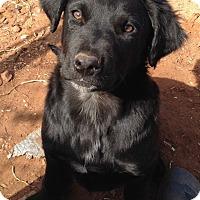 Adopt A Pet :: Janie - McLoud, OK