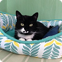 Adopt A Pet :: Missy - Medway, MA