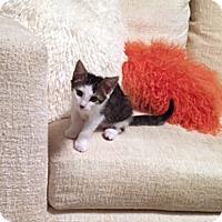 Adopt A Pet :: Gemma - Deerfield Beach, FL
