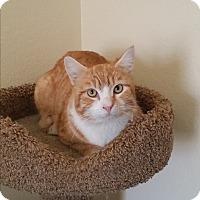 Adopt A Pet :: Sunshine - Palmdale, CA