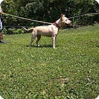 Adopt A Pet :: Toni - Canastota, NY
