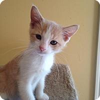 Adopt A Pet :: Frank - Bridgeton, MO