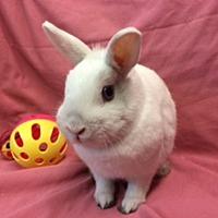 Adopt A Pet :: Flurry - Paramount, CA