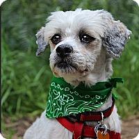 Adopt A Pet :: Milo - Los Angeles, CA
