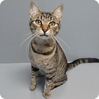 Adopt A Pet :: Lilo - Seguin, TX