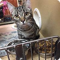 Adopt A Pet :: Naomi - Morganton, NC