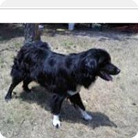 Adopt A Pet :: Lucky - Conway, AR