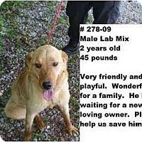 Adopt A Pet :: # 278-09 @ Animal Shelter - Zanesville, OH
