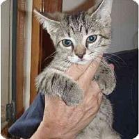 Adopt A Pet :: Sweet Pea - New Egypt, NJ