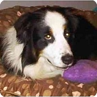 Adopt A Pet :: Bowden - Orlando, FL