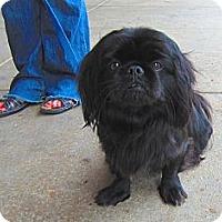 Adopt A Pet :: Princess - Alexandria, VA