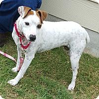 Adopt A Pet :: Emmie in San Antonio - San Antonio, TX