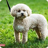 Adopt A Pet :: FRIDAY - West LA, CA