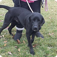 Adopt A Pet :: Moses - Cleveland, OH
