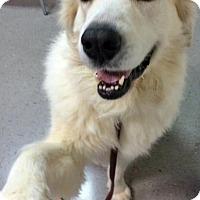 Adopt A Pet :: Lucky in AL - Beacon, NY