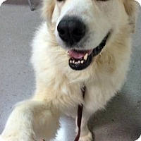 Adopt A Pet :: Lucky in AL - new! - Beacon, NY