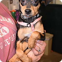 Adopt A Pet :: Susy~adopted! - Glastonbury, CT