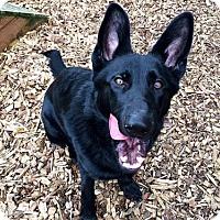 Adopt A Pet :: Cooper - Portland, OR