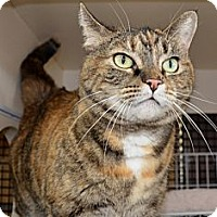 Adopt A Pet :: Nyla - Frederick, MD