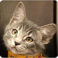 Adopt A Pet :: Cici - Encinitas, CA