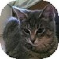 Adopt A Pet :: Mabel - Vancouver, BC