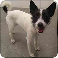 Adopt A Pet :: Mandi - Phoenix, AZ