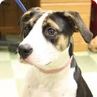 Adopt A Pet :: Libby - Dover, OH