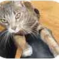 Adopt A Pet :: Smokey - Jenkintown, PA
