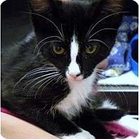 Adopt A Pet :: Betty - Encinitas, CA