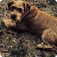 Adopt A Pet :: STEWART - Mission Viejo, CA