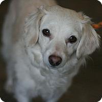 Adopt A Pet :: Rosie - Canoga Park, CA