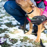 Adopt A Pet :: Hooch - Reisterstown, MD