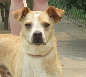 Terrier (Unknown Type, Small) Mix Dog for adoption in Westport, Connecticut - Dexter