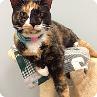 Adopt A Pet :: Crystal - Byron Center, MI