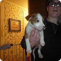 Adopt A Pet :: Gianna - Glastonbury, CT