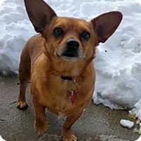 Adopt A Pet :: Madea - Holliston, MA