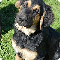 Adopt A Pet :: Winston - Westport, CT