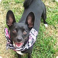 Adopt A Pet :: Tina - Pilot Point, TX
